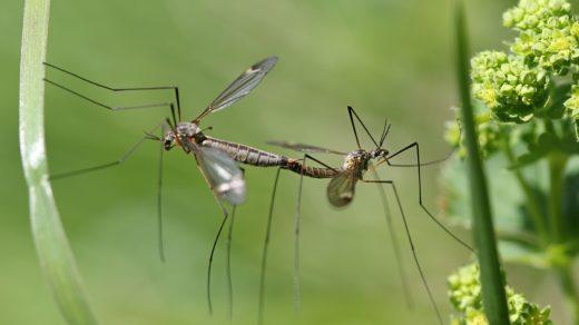 Все насекомые делают это