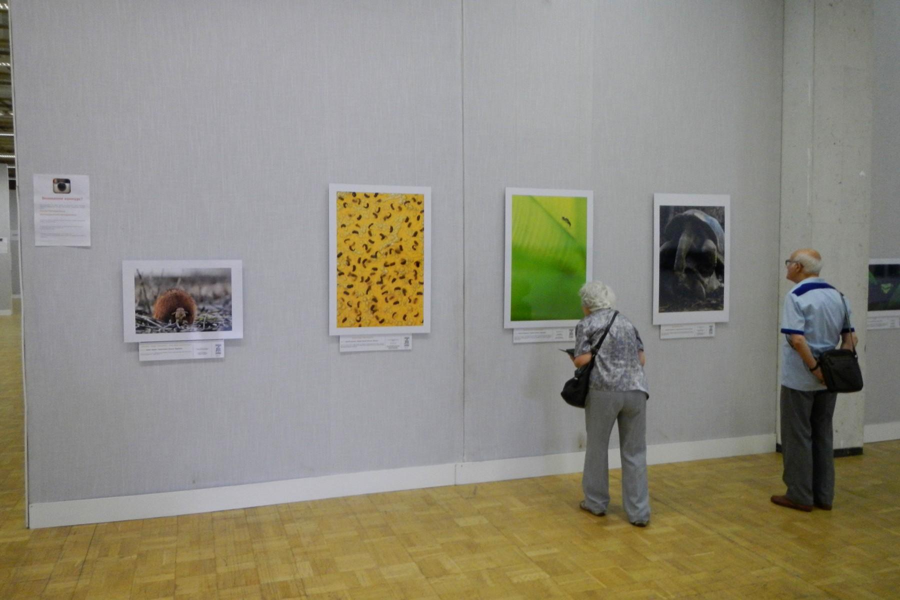 Фестиваль дикой природы Золотая Черепаха-8