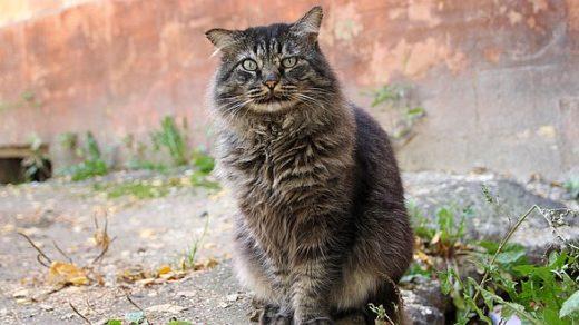 Кот. Просто кот.