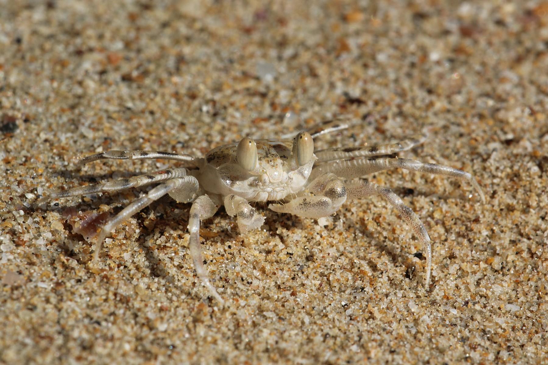 Маленький краб на песке