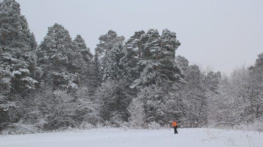 Снежный день в Заречном парке