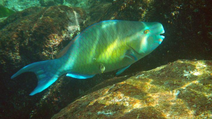 Подводный мир Андаманского моря у островов Симилан