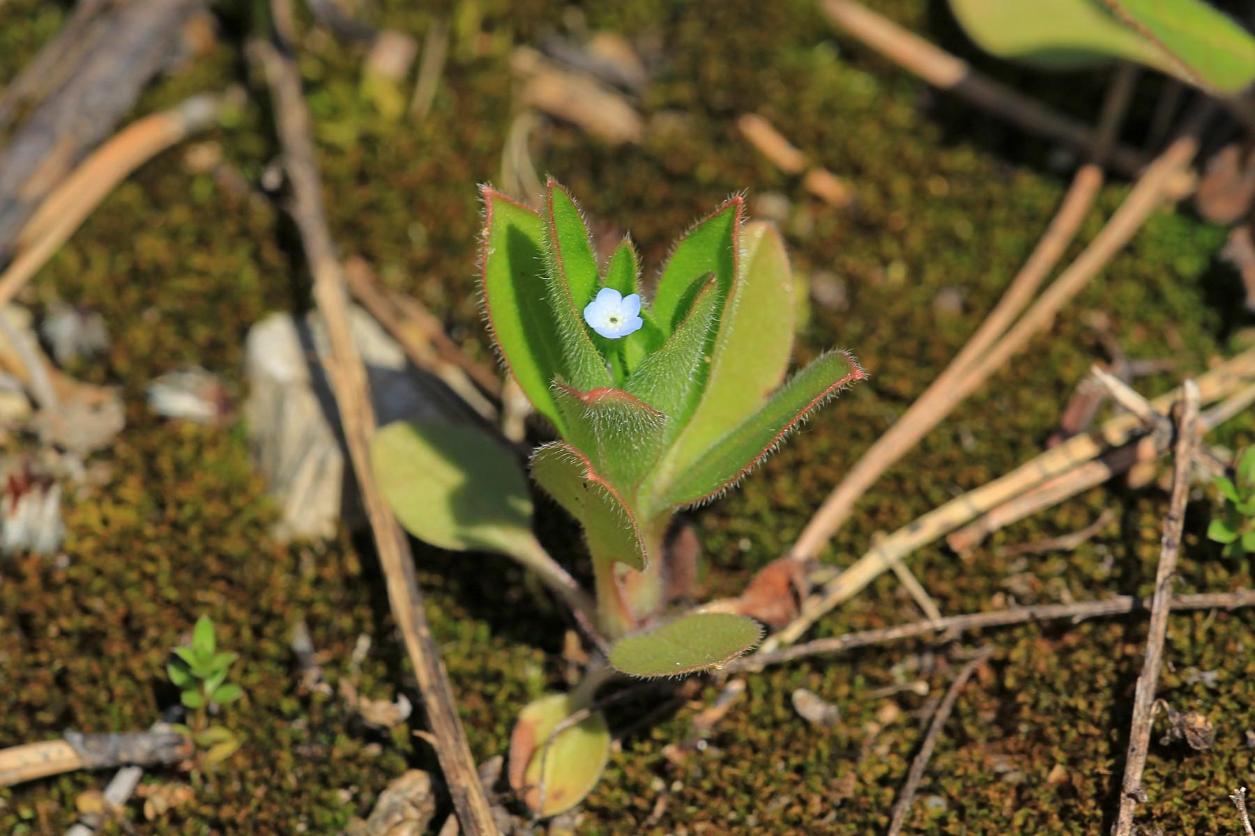 Самый маленький цветок