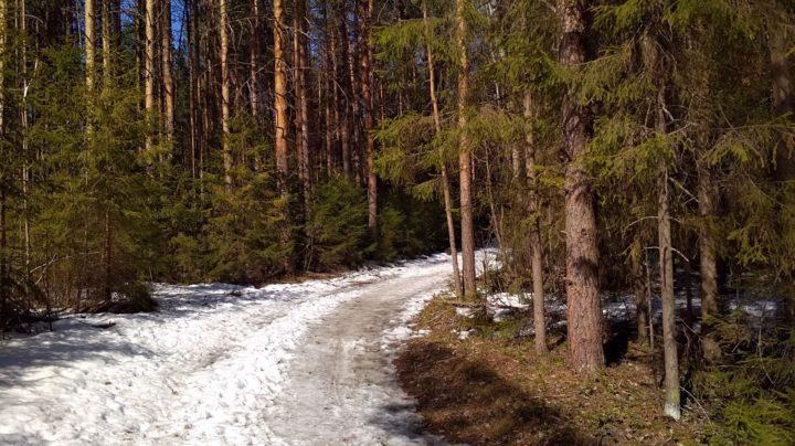 Ранняя весна в Порошино