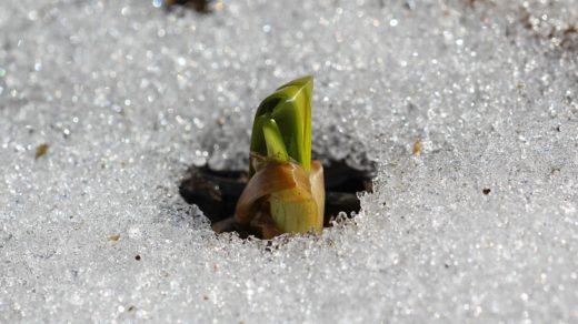 Живая природа в последний день апреля