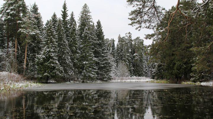 Предзимье: лесные озёра