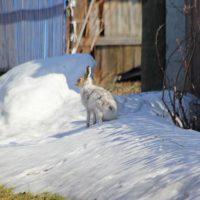 Весенний зайчик